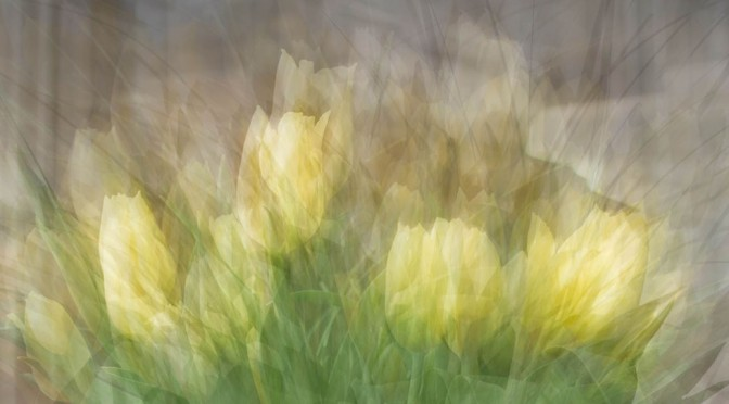 Tulipa in the round - detail. An example of in the round photo impressionism